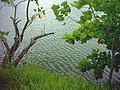 Lagoa do Taquaral - panoramio - enioprado.jpg