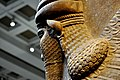 Lamassu from Nimrud, Iraq, 9th century BC. The British Museum, London.jpg