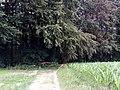 Landschaftsschutzgebiet Waldgebiete bei Dielingdorf und Handarpe LSG OS 00025 Datei 24.jpg