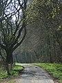 Lane between East Woodhay and Ashmansworth - geograph.org.uk - 403299.jpg