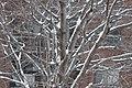 Le résultat de la mini-tempête sur les branches d'arbres - panoramio.jpg