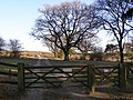 Leaving Roe Inclosure for Bratley Plain, New Forest - geograph.org.uk - 330604.jpg