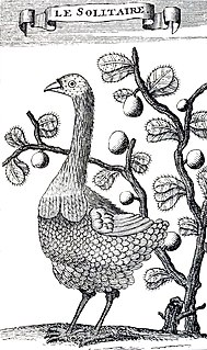 Rodrigues solitaire An extinct, flightless bird that was endemic to Rodrigues