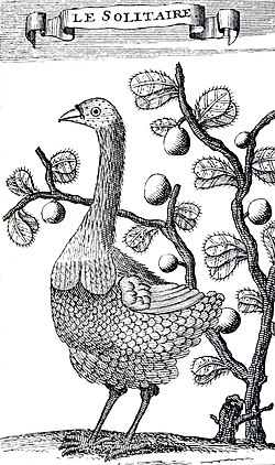 Engraving of a female Rodrigues Solitaire in front of a bush