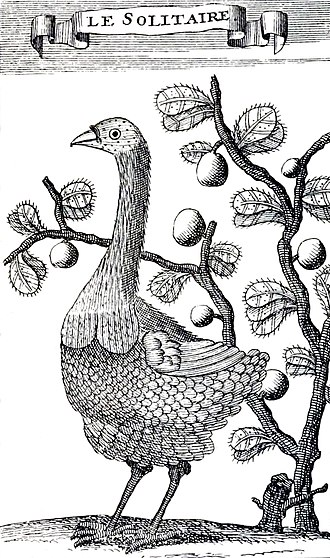 Rodrigues solitaire - 1708 drawing by François Leguat, the only illustration of this species by someone who observed it alive