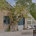 Leiboom tegen de gevel van het gebouw naast de oranjerie - Voorschoten - 20406365 - RCE.jpg