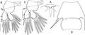 Lepeophtheirus elegans parasite130014-fig3.tif