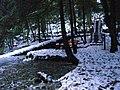 Lily Pond - panoramio.jpg