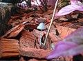 Little Fungi.jpg