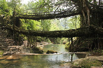 Simple suspension bridge - Living root bridges in Nongriat village, Meghalaya
