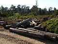 Logging Forest Loss IMG 3939 04.jpg
