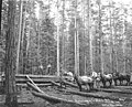 Logging crew yarding poles with horse teams, Phoenix Logging Co, Potlatch, ca 1919 (KINSEY 409).jpeg