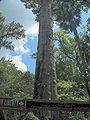 Longwood Senator Park Big04.jpg