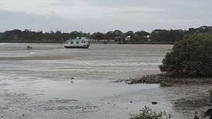 Tin Can Bay, Queensland - The mangrove areas are popular sites for birdwatching