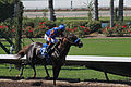 Los Alamitos Sept 2014 IMG 6725 (15131075889).jpg