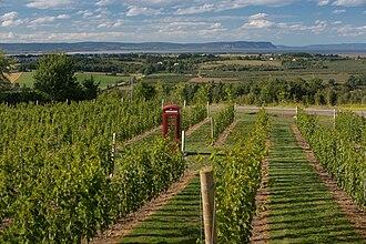 Kings County, Nova Scotia - Luckett Vineyards, Gaspereau Valley, Kings County