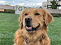 Lucy the Dog at The Green, Town Square Las Vegas.jpg