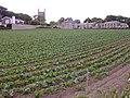 Ludgvan field penwith cornwall.jpg