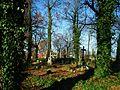 MOs810 WG 55 2016 Pyzdry Forest III (Evangelical Cemetery in Stawiszyn) (frgam.).jpg