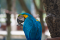 Macaw eating Peanuts.png
