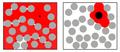 Macromolecular crowding.png