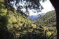 Madeira levada Ribeiro Frio Balcões 2016 2.jpg