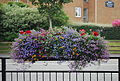 Maghull Square - Maghull in Bloom 5.JPG