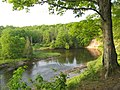 Manistee River Trail - panoramio.jpg