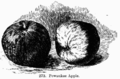 Manual of Gardening fig273.png