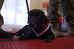 Marine's four-legged friend receives award for actions in Operation Iraqi Freedom 161024-M-TA471-059.jpg