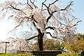 Maruyama Park (3516085378).jpg