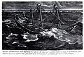 Meduse stranded-IMG 4806.JPG
