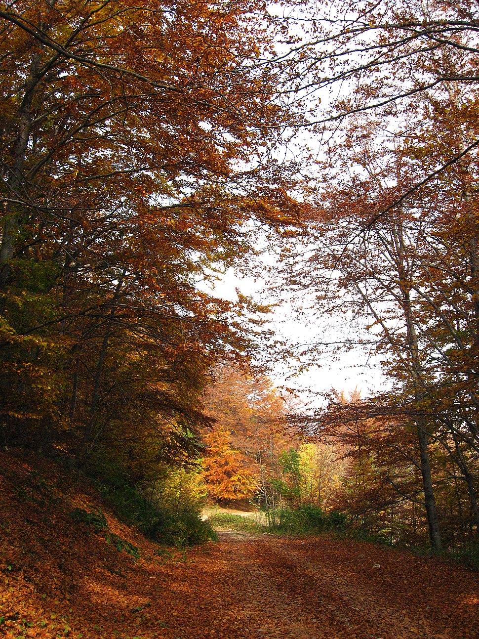 Medvednik - zapadna Srbija - Na putu ka vrhu planine Jablanik 10