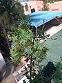 Mehndi flowers.jpg