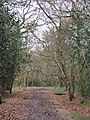Merrions Wood Walsall - panoramio.jpg