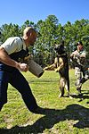 Military Working Dogs DVIDS258000.jpg
