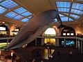 Millstein Hall of Ocean Life.jpg