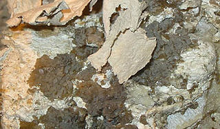 Palygorskite A magnesium aluminium phyllosilicate mineral