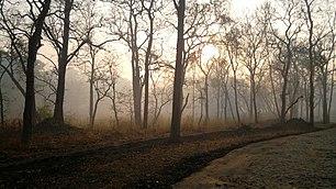 Misty Wayanad Wildlife Sanctuary, Muthanga Range - panoramio (4)