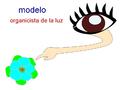 Modelo organicista luz.png
