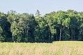 Monheim 3 Alteichen am Waldrand 007.jpg