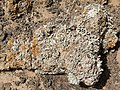 Montana Colorada - stone with lichen - Fuerteventura - 10.jpg