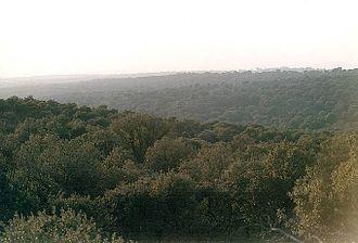 El Pardo - Image: Monte del Pardo 2