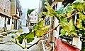 Moroccan neighborhood.jpg