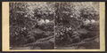 Mossy dell, vicinity of Delaware Water Gap, Pennsylvania, by Moran & Storey.png