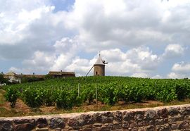 Vineyards and windmill