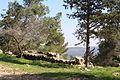 Mount Eitan IMG 2678.JPG