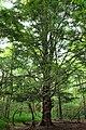 Mountaintop Forest (2) (9525568321).jpg