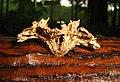 Mushroom (2745605030).jpg