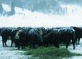 NRCSWY02010 - Wyoming (6887)(NRCS Photo Gallery).tif